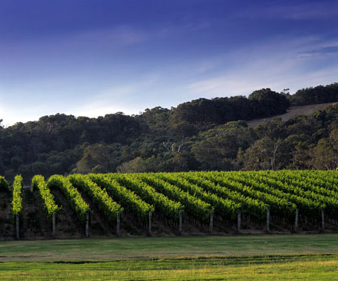 Cullen Wines, Margaret River, Western Australia
