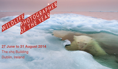 wildlife photographer of the year 2