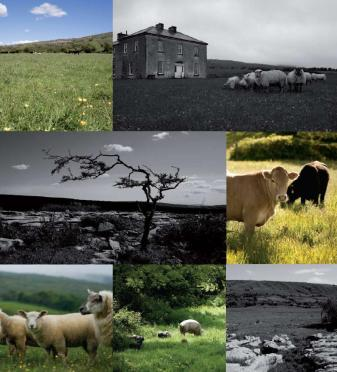 ely family farm_Burren farmland_collage