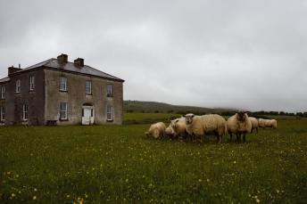 craggy island lamb